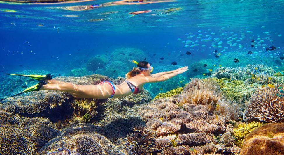 mejores excursiones cozumel y snorkel b2bviajes