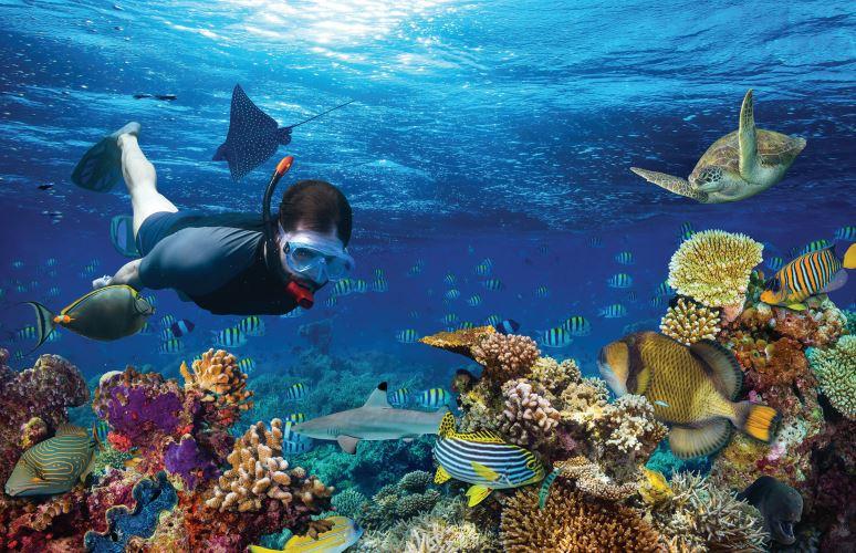 Excursiones opcionales en Punta Cana Blue Marin b2bviajes