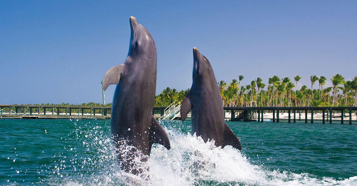 Mejores Ecursiones Punta Cana Dolphin Actio Precios b2bviajes